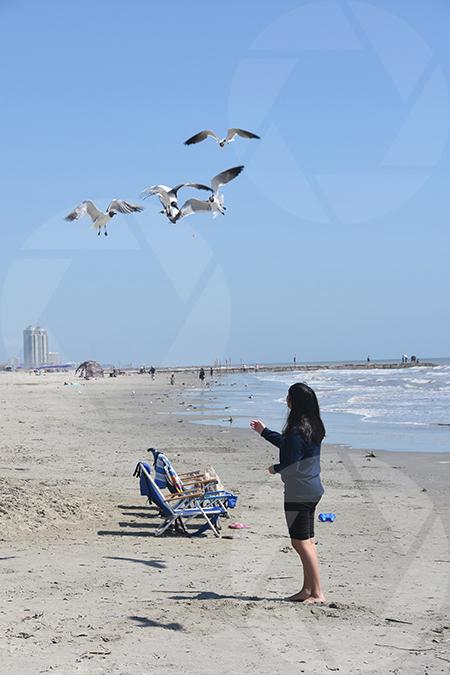 A teenage girl feeding the seagulls on Galveston Beach