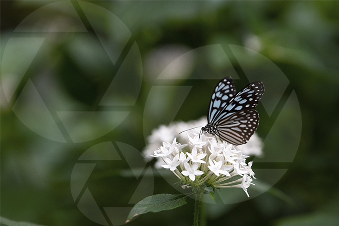 Butterfly image with flower