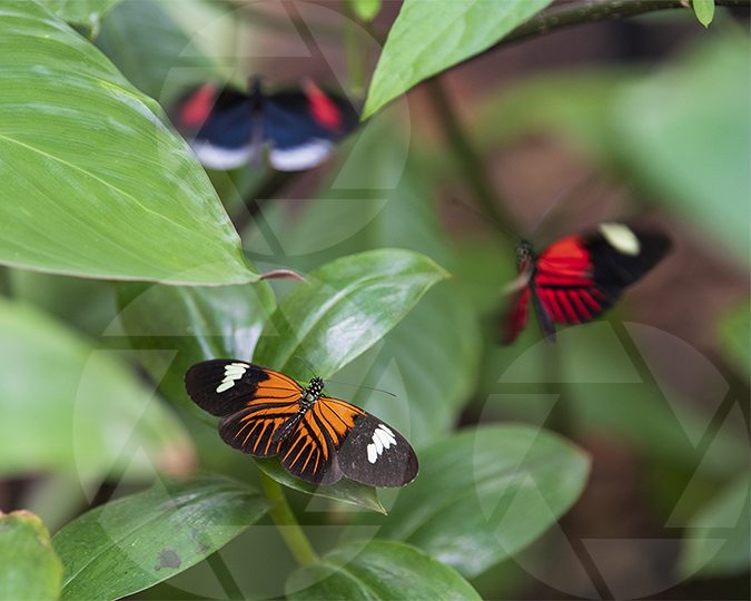 Image of three butterflies