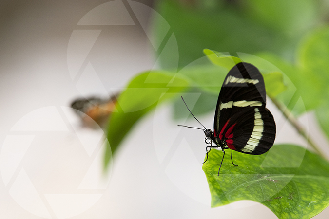 Butterfly on a leaf image