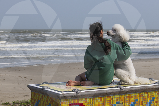 Teenage girl with her white standard poodle dog enjoying a moment together on Galveston Beach.