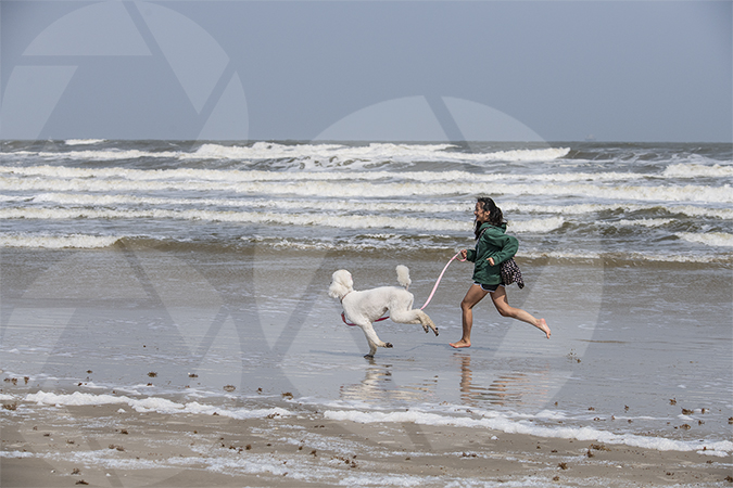Teenage girl running with her white standard poodle dog on Galveston Beach