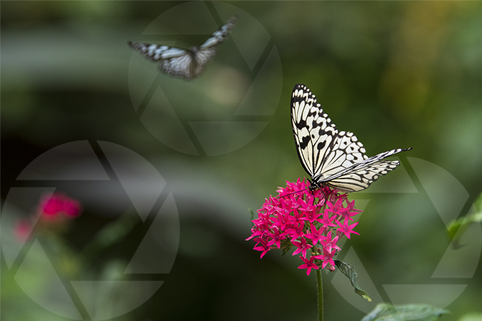 Picture of a flower and butterfly