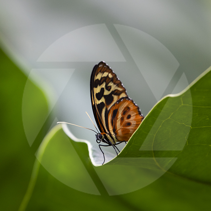 Photo of a butterfly on a leaf.